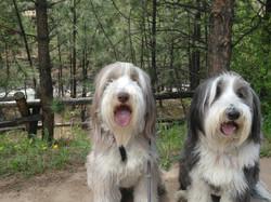 Paisley & Riley on a Hike