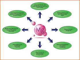 Mg Chart.png