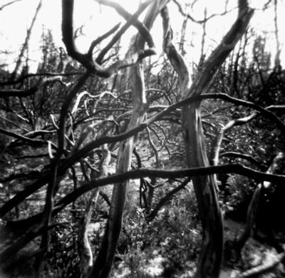 tangledforest.jpg