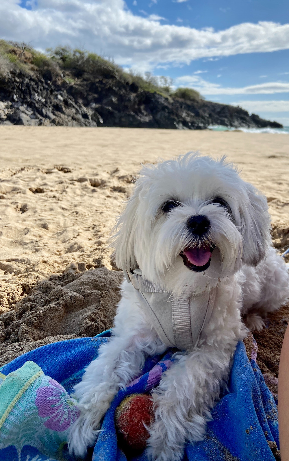 making time for your dog in hawaii interoperate