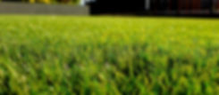 green grass field_edited.jpg