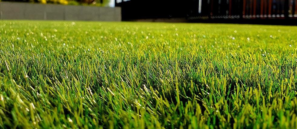 green grass field_edited.jpg