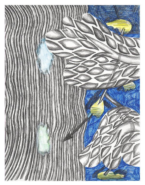 Zigg 23 x 29.5cm Graphite, pen, crayon,