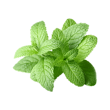 kisspng-peppermint-extract-essential-oil