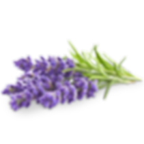 kisspng-english-lavender-flower-lavender