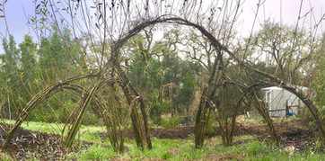 ND WILLOW ARCH.jpg