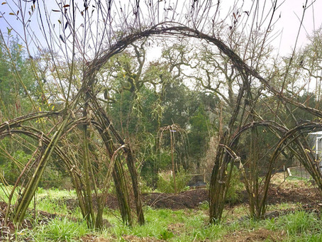 Natural Willow Arches to the Rescue