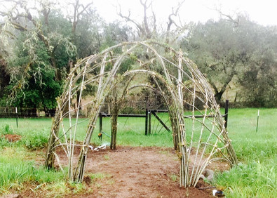 Willow Dome.jpg