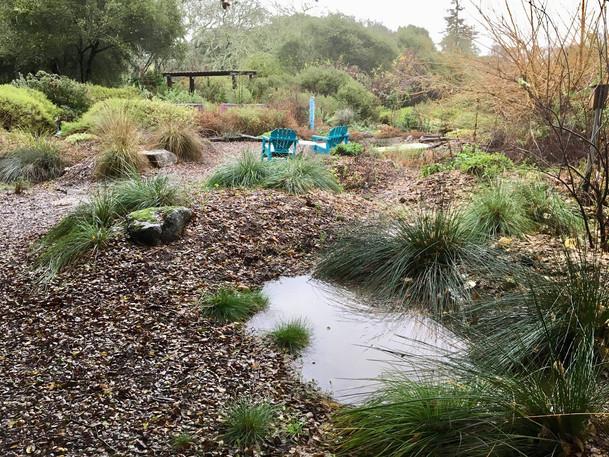 Rain Basin Songbird1.jpg