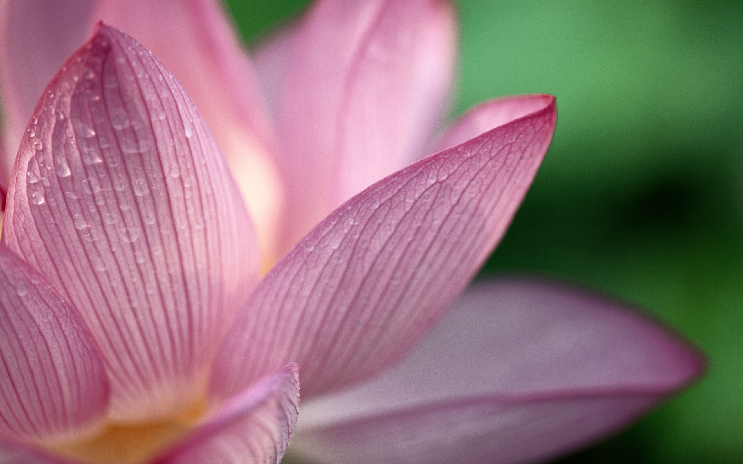 lotus+2.jpg