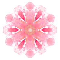 Flower%20mandala%20isolated%20on%20white