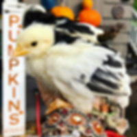 Chicks & Hatchlings
