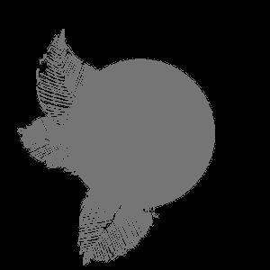 header logo left.png