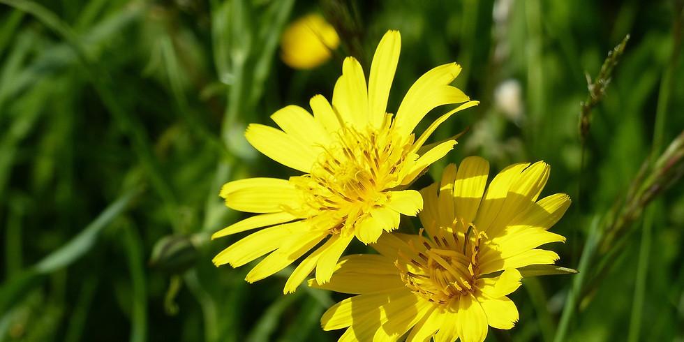 Sortie plantes sauvages comestibles (Créon 33)