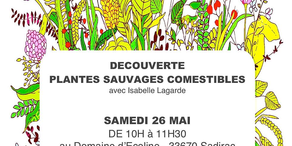 Sortie: Plantes sauvages et comestibles (1)