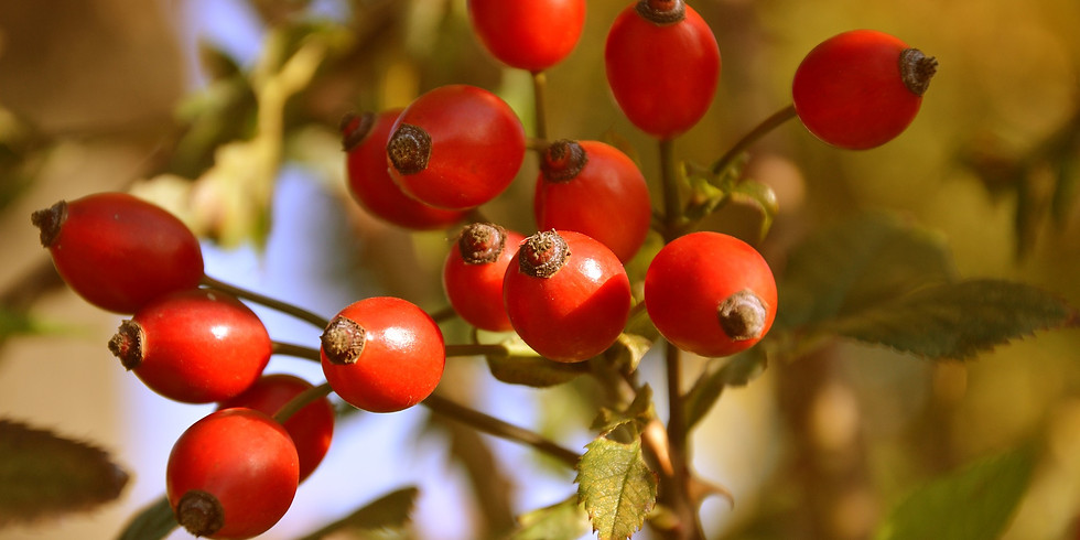 Sauvages Comestibles d'automne (Sadirac 33)