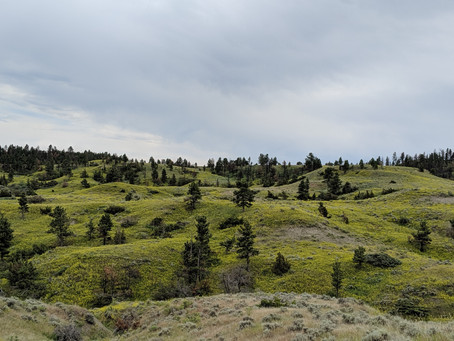 The greening of the Northern Great Plains and its biogeochemical precursors