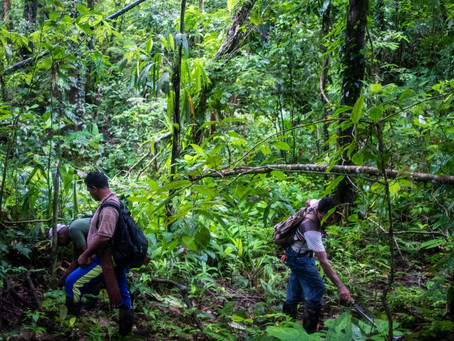 Symbiotic N fixation is sufficient to support net biomass accumulation in a tropical forest