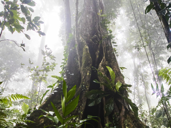 Negative associations between nitrogen fixing trees and tropical forest biomass accumulation