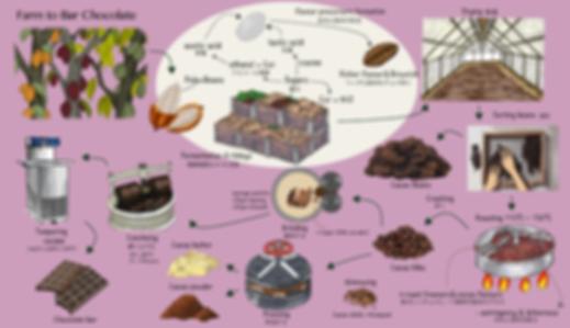 チョコレートまでのプロセス