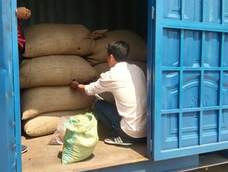 初のカカオ豆の輸出