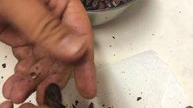 カカオ豆からチョコレート作り