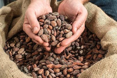 カカオ豆を厳選