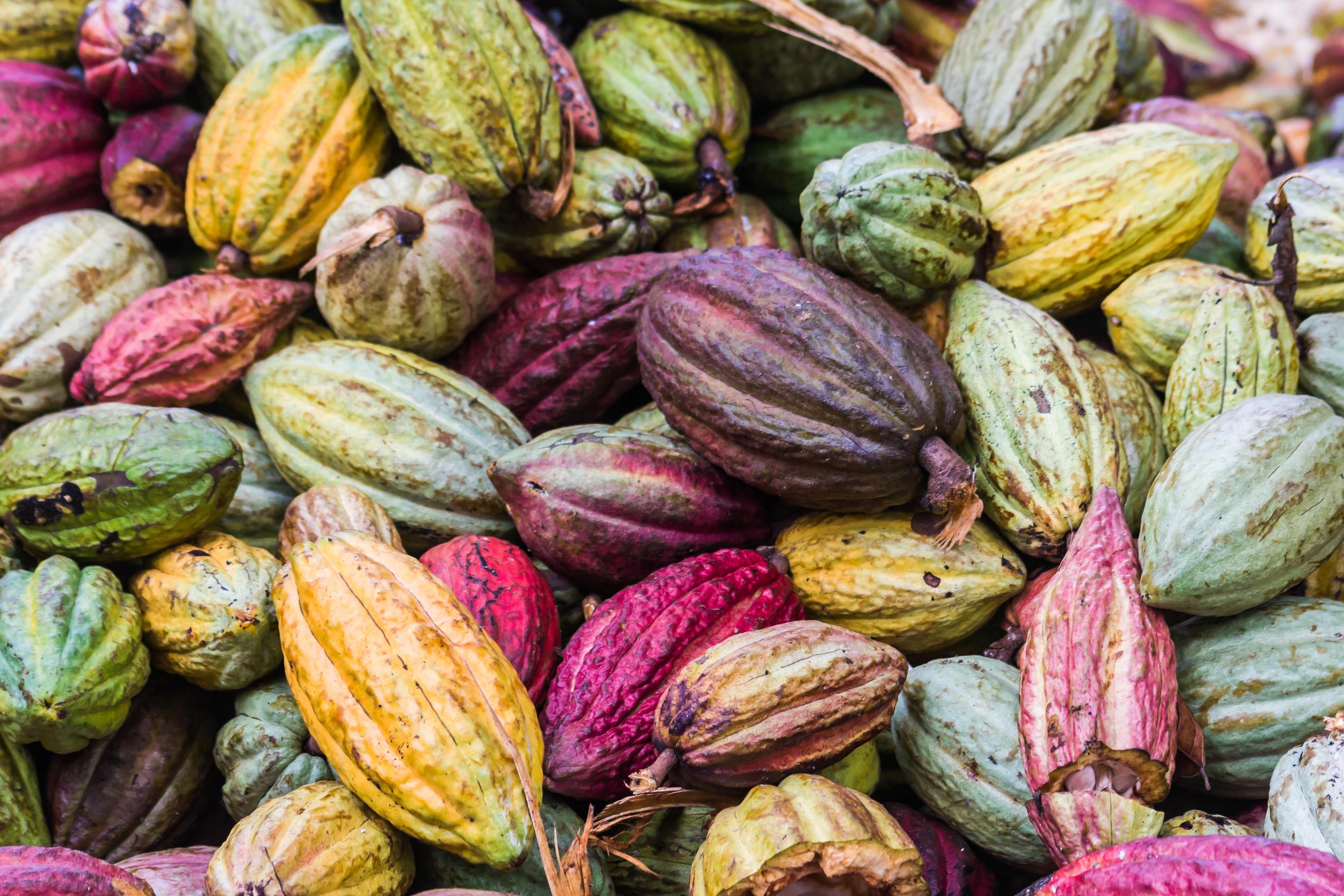 cacao 実