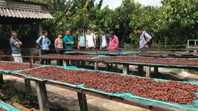 【カカオ農園ツアー in ベトナム】ご案内します