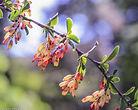 Flower5-1.jpg