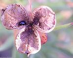 Flower4-1.jpg