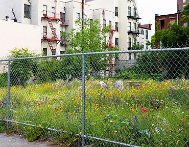 Harlem Community Garden copy.jpg