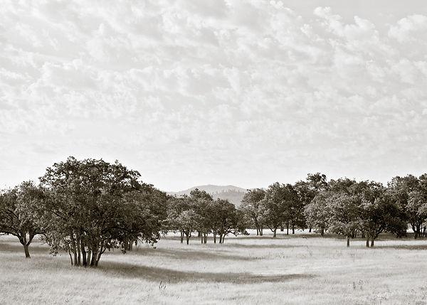 Oak_&_clouds.jpg