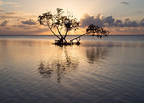 sunset_mangrove_1.jpg