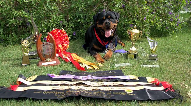 Retired Von Halla Rottweile & French Bulldog Perth Australia