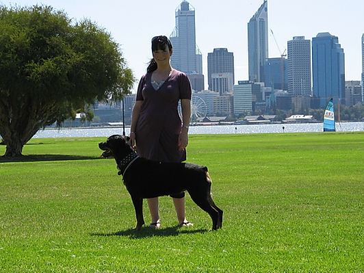 Retired Von Halla Rottweiler & French Bulldogs Perth Australia