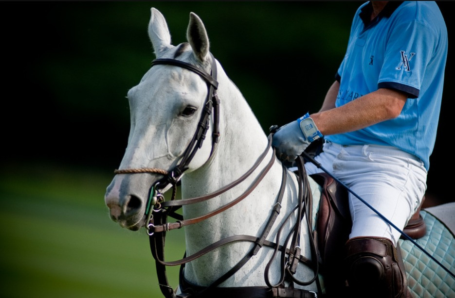 cheval de polo le juste prix