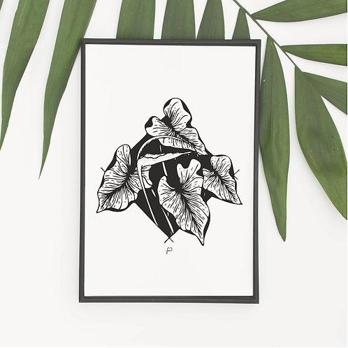 """""""Anthurium Brownii"""