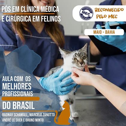 Pós Graduação em Clínica Médica e Cirúrgica em Felinos-Bahia-Maio