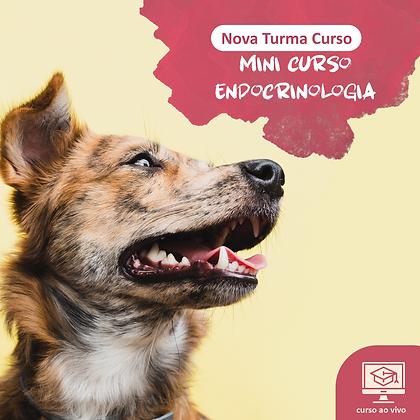 Mini Curso de Endocrinologia em Pequenos Animais - Ao Vivo