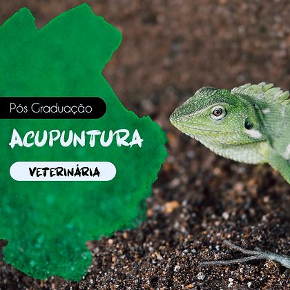 Pós Graduação em Acupuntura Veterinária -Santa Catarina - Setembro