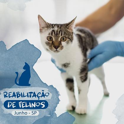 Curso Reabilitação de Felinos - São Paulo - Junho