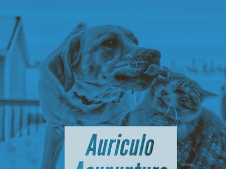 Auriculo Acupuntura