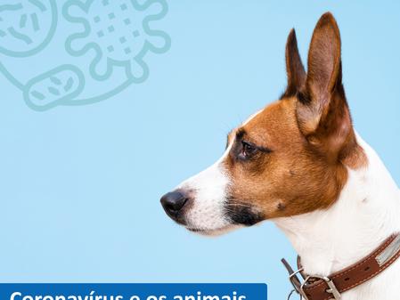Coronavírus e os animais