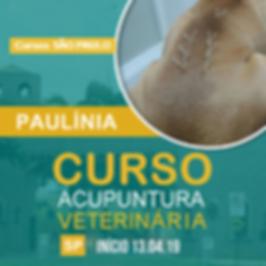 curso-acupuntura-paulinia.png
