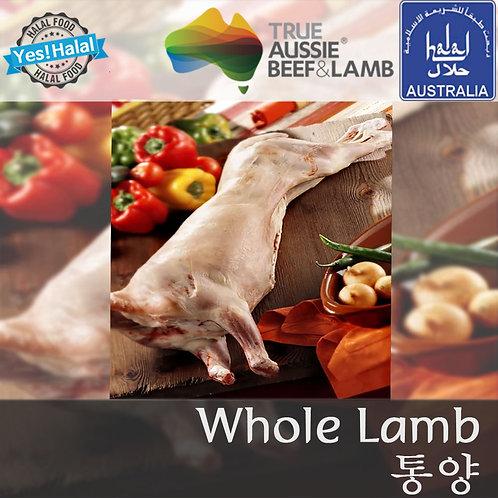 Halal Whole Lamb (13~20Kg - 12500won/1Kg)