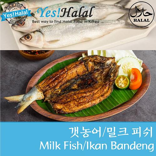 Milk Fish/Ikan Bandeng (3p, Net 1Kg)
