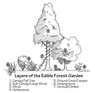 Forest_Garden_Labeled.jpg
