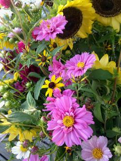 Cosmos, Triloba Rudbeckia, Sunflowers
