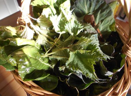 cueillettes et préparations de plantes sauvages